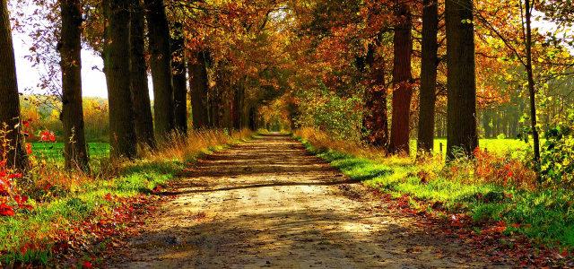 树林道路背景高清背景图片素材下载