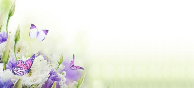 简约唯美温馨蝶恋花海报背景高清背景图片素材下载