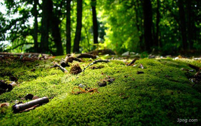 唯美森林树林背景高清大图-树林背景淡雅/清新/唯美