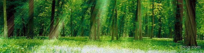 树林背景背景高清大图-树林背景特效图片