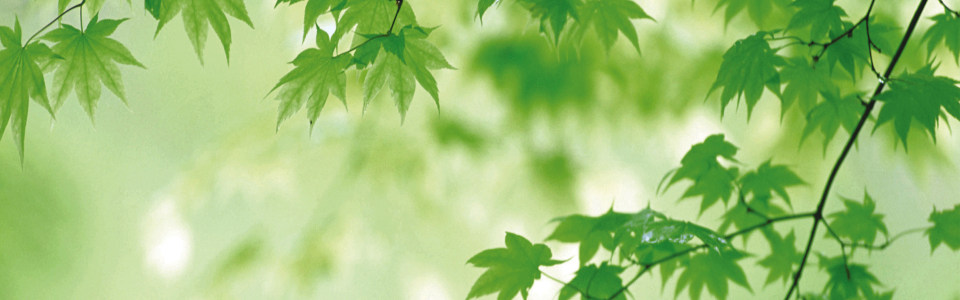 唯美绿色枫叶清新海报背景