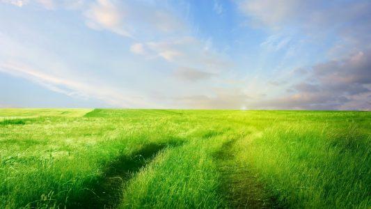 绿地草地背景高清背景图片素材下载