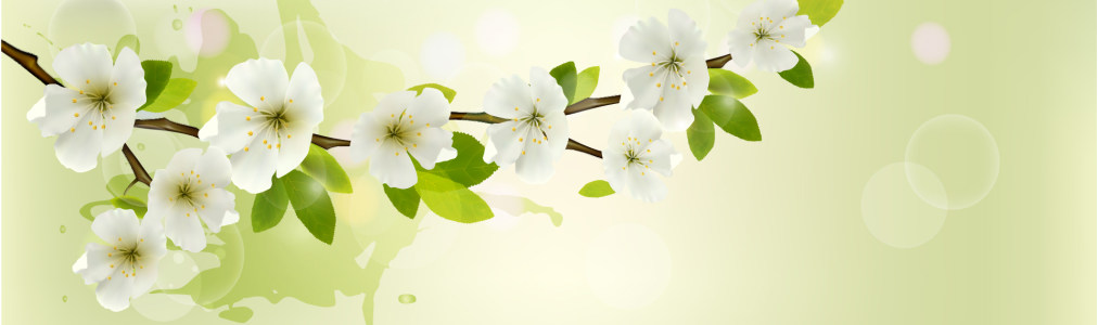 白色杏花banner背景