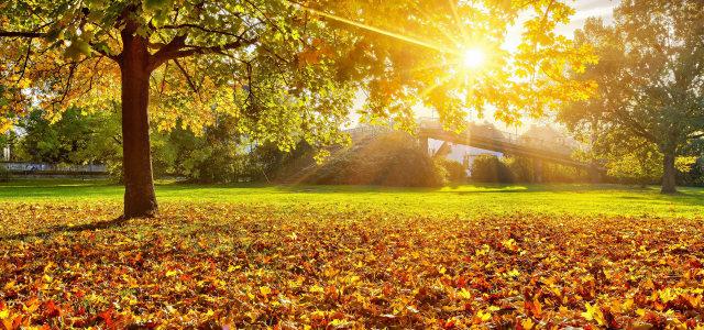 夕阳下的草地高清背景图片素材下载