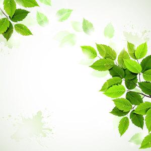 精美绿色树叶背景