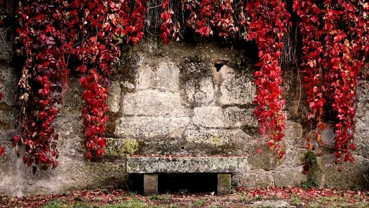 红色叶子墙面清新背景