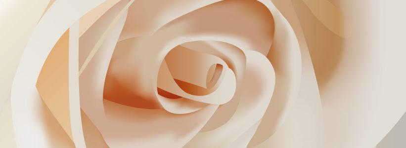 白色玫瑰唯美背景banner