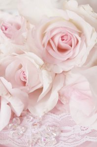 粉色玫瑰花背景高清背景图片素材下载