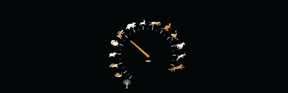 动物时钟背景banner设计