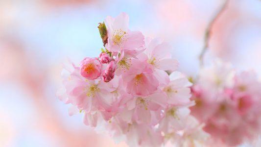粉红色花朵背景