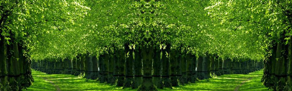 唯美树木丛林淘宝海报背景