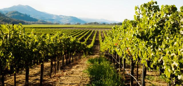 葡萄酒庄园高清背景图片素材下载