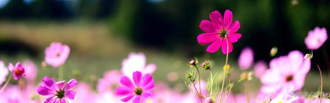 花朵背景背景高清大图-花朵背景鲜花