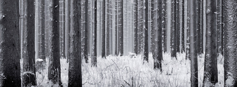 树林冬季雪景背景banner
