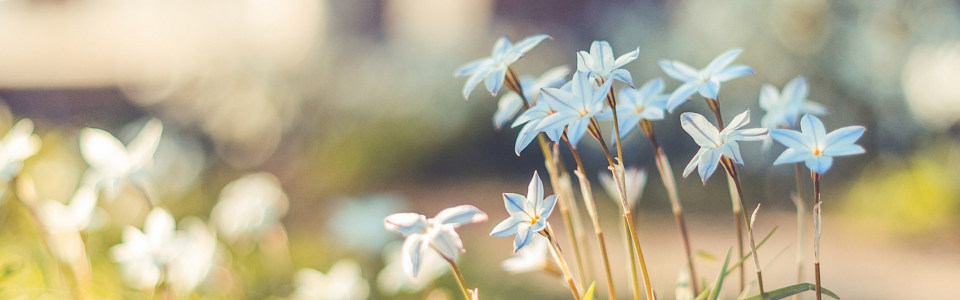 花朵背景 唯美背景 浪漫背景 炫酷背景 质感 纹理 绚丽缤纷