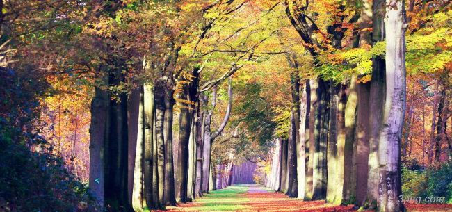 树林道路背景背景高清大图-树林背景自然/风光