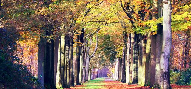 树林道路背景