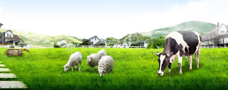 蓝天草地奶牛牛奶广告
