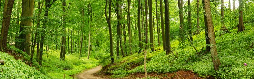 树林风景背景