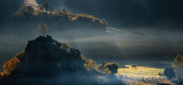 树林雾气背景