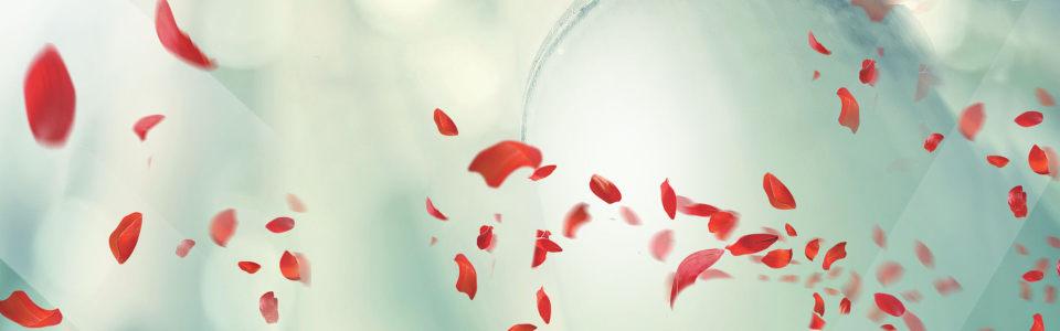 飞溅的花瓣banner背景图