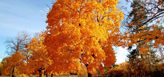 秋天大树摄影高清背景图片素材下载