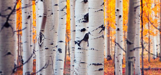 高清大树摄影