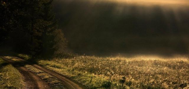 金色草地背景