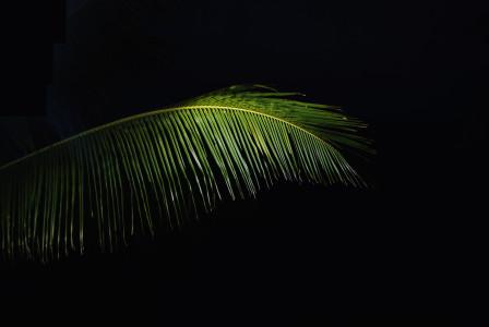 黑暗中的棕榈叶子高清背景图片素材下载