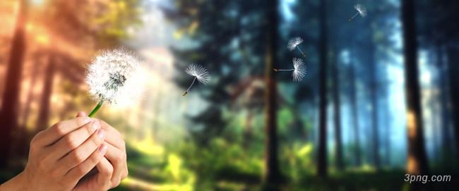 森林放飞蒲公英背景高清大图-蒲公英背景其他图片