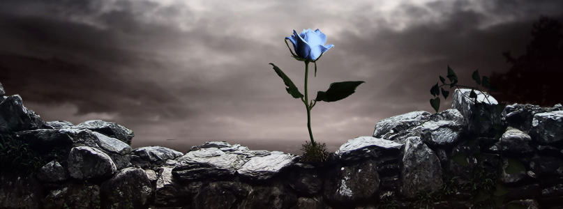动漫岩石中的蓝玫瑰背景banner