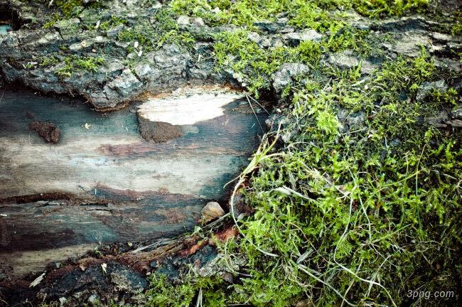 树皮纹理背景背景高清大图-树皮背景底纹/肌理