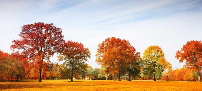 秋季公园美丽的树下摄影