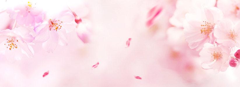 梦幻粉色花朵背景