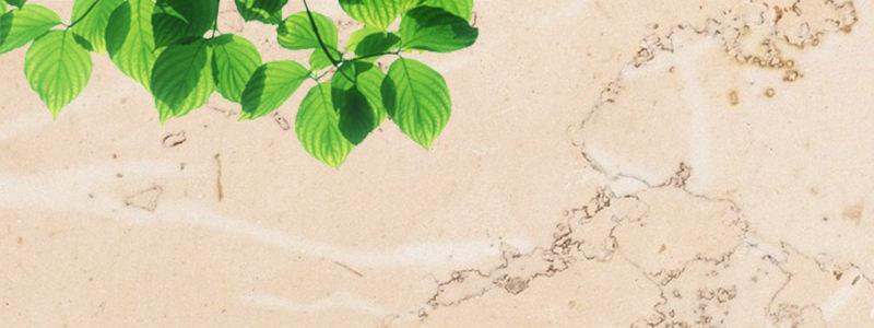 创意树叶背景