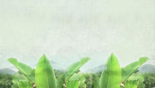 绿色叶子清新背景