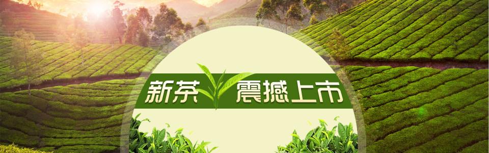 新茶上市banner