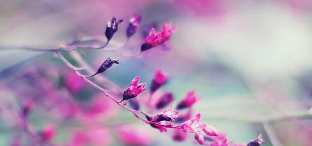 红色花朵背景