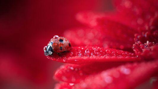 红色的花高清背景图片素材下载