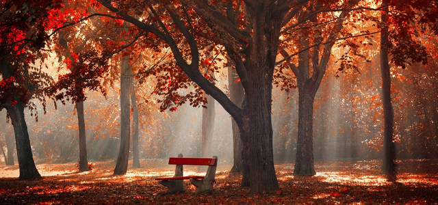秋天树下背景
