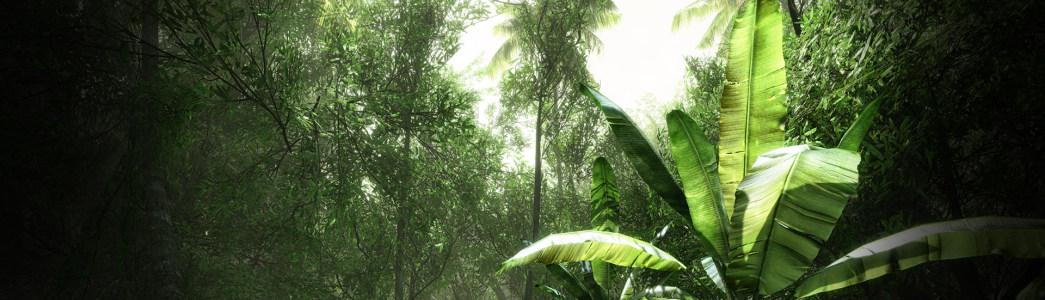原始森林香蕉树风景banner壁纸