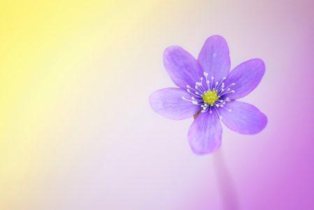 春天的花背景