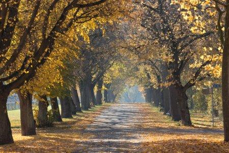 秋天风景高清背景图片素材下载