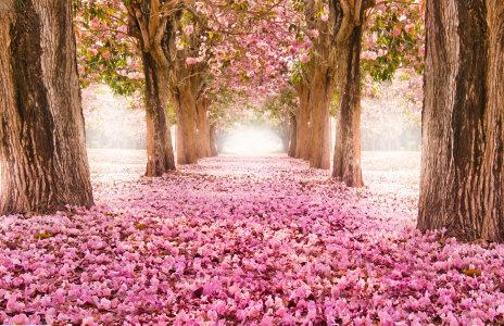 浪漫的春天公园背景