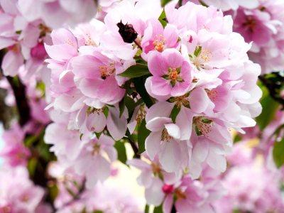 春天花卉高清背景图片素材下载