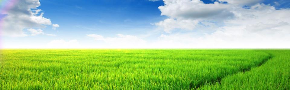 绿色草地淘宝海报背景高清背景图片素材下载