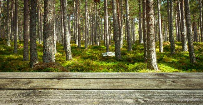 森林背景背景高清大图-背景背景底纹/肌理