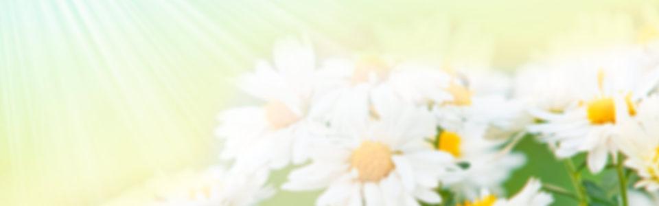 春季背景高清背景图片素材下载