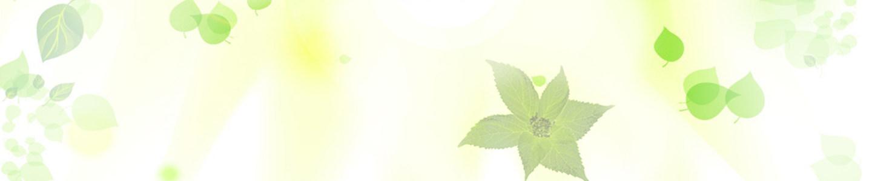 绿叶banner创意设计高清背景图片素材下载