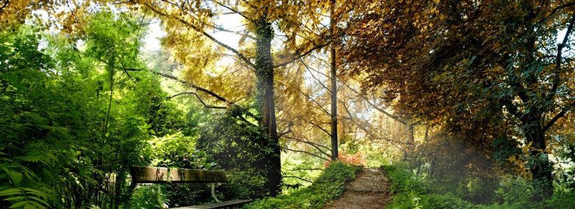 秋天风景海报